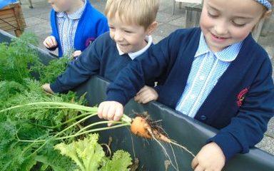 Edible Plants in Y1EB