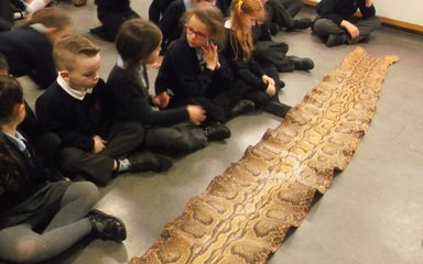 A fantastic visit to the Great North Museum by Year 2s