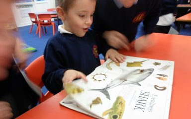 Year 1NS learn about Fiction and Non-Fiction