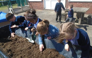 Planting in Year 1