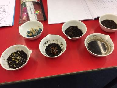 Year 5 sow some seeds!
