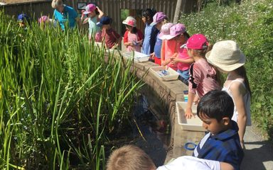 Year 3 at Washington Wetlands