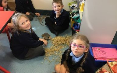 Building the 3 pigs' houses in year 1